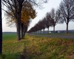 20141123_86_Braeuninger