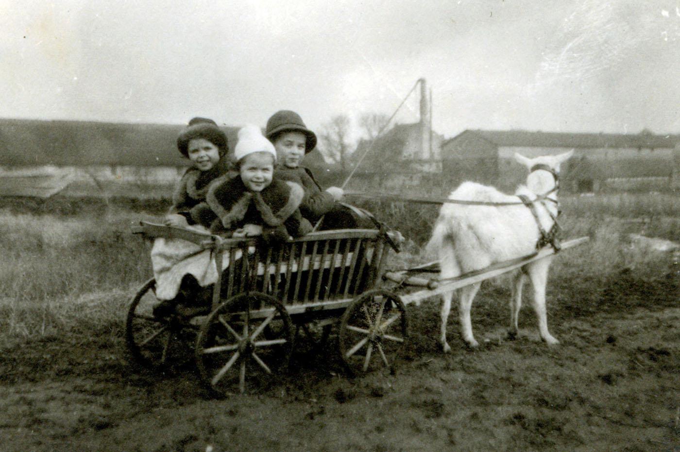 Den Ziegenbock angespannt: Hans Bräuninger mit seinen Schwestern Lore und Rose auf Gut Welsow.